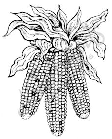 E7624 Three Hanging Indian Corn