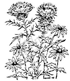 F3748 Thistle and Black-eyed Susans-Small