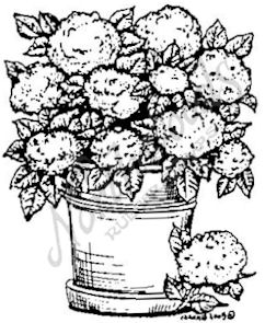 F4318 Pot Of Hydrangeas