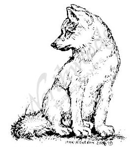 F6557 Large Wolf Pup