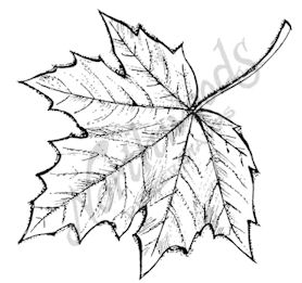 F7599 Open Sugar Maple Leaf