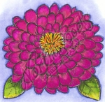 F8502 Zinnia Blossom With Leaves