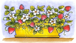 J8508 Strawberry Plants In Planter Box