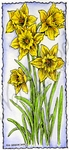 J9478 Daffodils In Deckle Rectangle