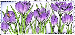 J9479 Crocus In Deckle Rectangle