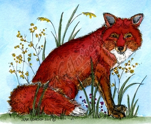 M10217 Matthew's Fox In Weeds