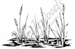 M1631 Large Cattails and Water