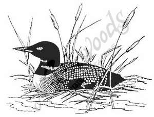 M604 Common Loon - Medium