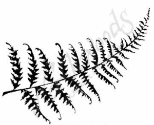 M6219 Solid Fern Leaf
