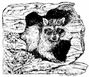 M6884 Doug's Raccoon In Log
