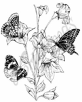 M7287 Harebell With Three Butterflies
