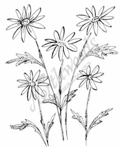 M7345 Sketch Daisies and Leaves