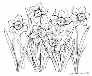 M8017 Cluster Of Daffodils