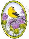 M8433 Goldfinch On Thistle Oval