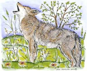 M8544 Howling Coyote