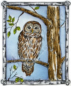 M9057 Owl In Birch Frame