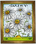 M9074 Daisy Northwoods Seeds