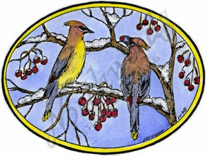 M9314 Cedar Waxwings And Berries In Oval