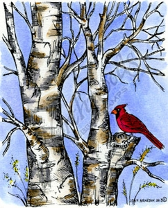 M9315 Cardinal On Bare Branched Birch