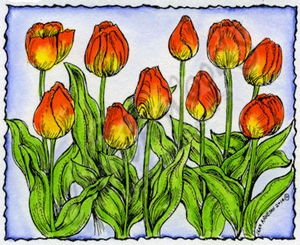 M9481 Tulips In Deckle Rectangle