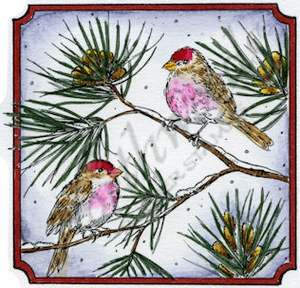 Redpolls On Pine In Notched Square MM8891