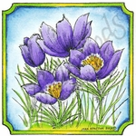 Pasque Flower In Notched Square MM9091