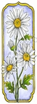 N8516 Tall Framed Daisy