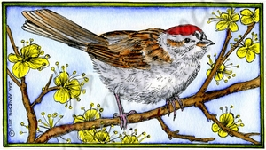 NN10201 Chipping Sparrow On Blossom Branch In Rectangle Frame