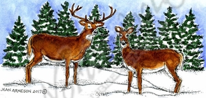 O10343 Deer Pair And Pines