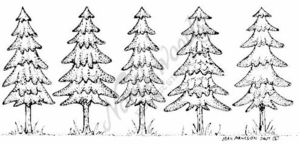 O4957 Contemporary Pine Tree Border