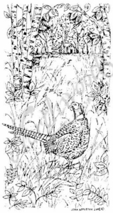 O6737 Vertical Pheasant In Woods