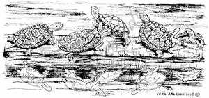 O7365 Turtles On Log