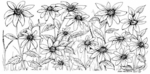 O7615 Blackeyed Susan Border