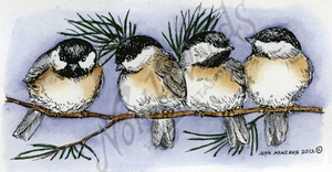 Four Chickadees On Pine Branch O8880