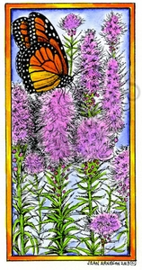 O8962 Monarch On Liatris Frame