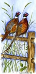 O9054 Pheasants On Fence