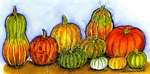 O9190 Ornamental Pumpkins