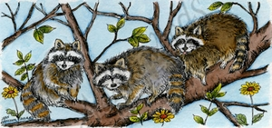 O9527 Three Raccoons In Tree
