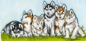 O9528 Husky Puppies