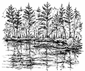 P1612 Leaning Pines