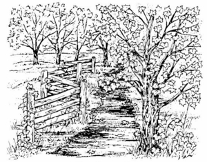 P2749 Country Path