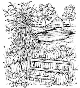P3718 Farm With Cornstalks and Pumpkins