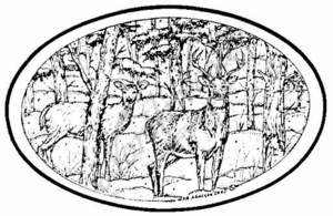 P3966 Deer Pair Oval