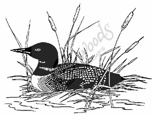 P604 Common Loon - Large