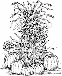 P6226 Pumpkins, Sunflowers and Cornstalks