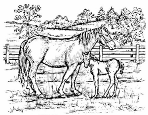P672 Mare and Colt