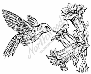 P675 Ruby Throated Hummingbird and Flower