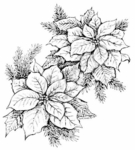 P6800 Double Poinsettia With Pine