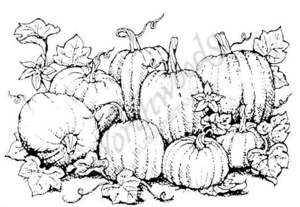 P706 Pumpkin Patch