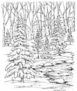 P7142 Snowy Spruce In Forest With Stream